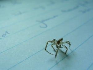 Dit spinnetje viel tijdens het proeven opeens op mijn schrijfblad. Ook al minstens 30 jaar dood.