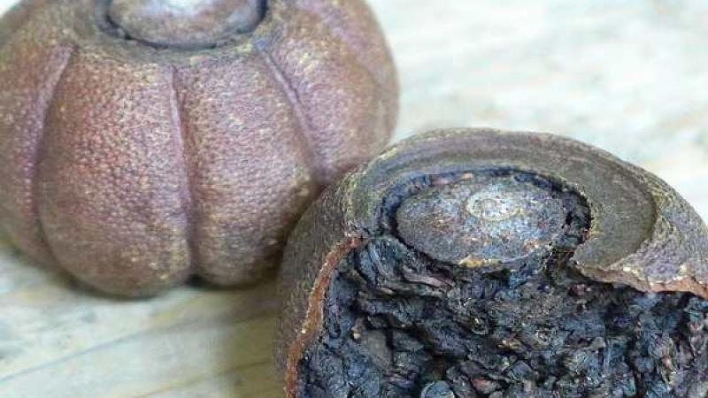 tie-guan-yin-sinaasappel