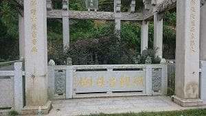 Originele Tie Guan Yin planten