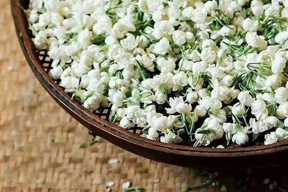 Piao Xue Snow - flower jasmine