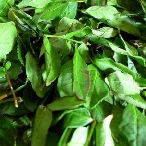 Tie Guan Yin - het oxideren van de randjes van het blad