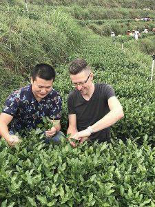 Tie Guan Yin - het snijden/plukken van het blad (caiqing)